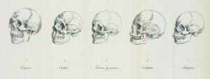 Blumenbach skulls